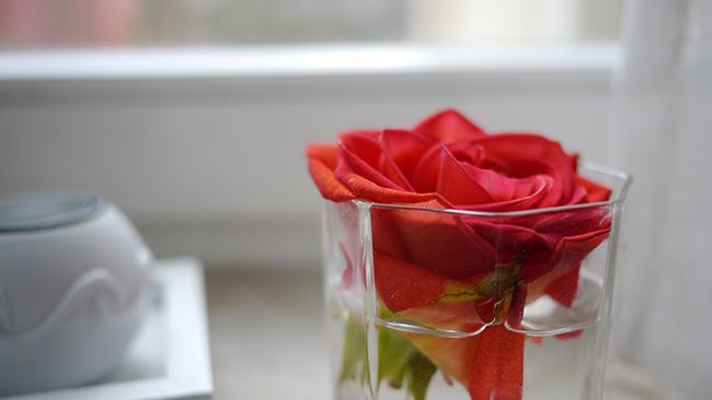 bild-rose