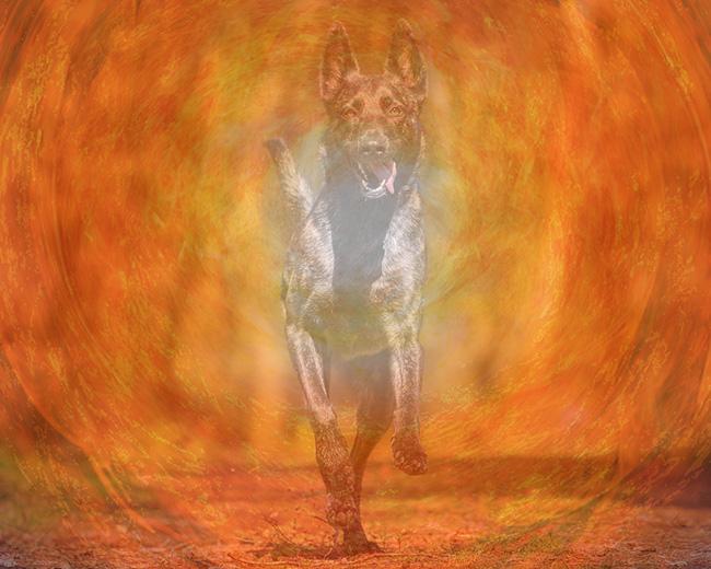 hund-chakra-energie